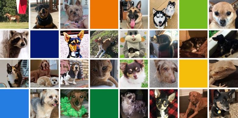 TSG Blog Pet Collage-01